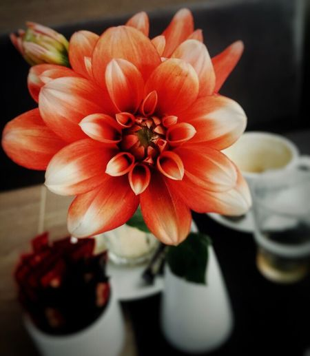 Flower on the breakfast table IPS2016Stilllife LLLimages Pastel Power