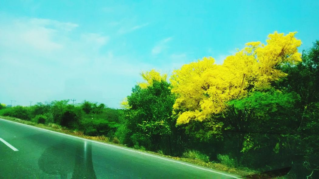 Tree Yellow Water Nature Growth Transportation Car Plant Sky No People Day Beauty In Nature Outdoors Close-up