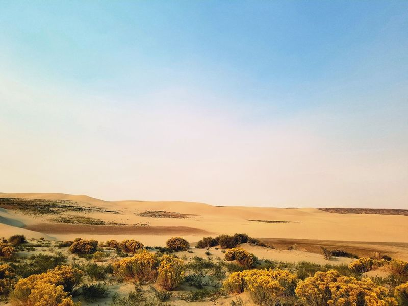 Wyoming Landscape Red Desert Remote Places The Great Divide Wyoming Killpecker Sand Dunes Singing Sands Dune EyeEm Selects Sand Dune Clear Sky Desert Sand Blue Arid Climate Horizon Sky Landscape
