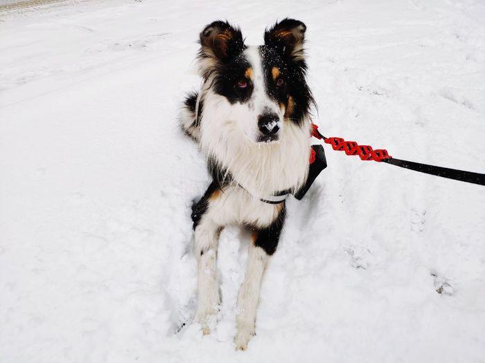🐶 Pets Snow