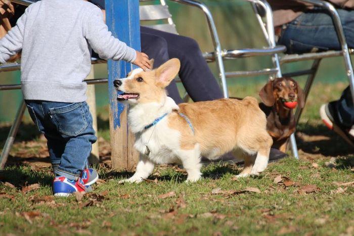 Pet Portraits Dog Pets Togetherness Day Boy And Dog Friendship Corgi Welsh Corgi Pembroke Welsh Corgi Outdoors Animal Themes Pet Photography