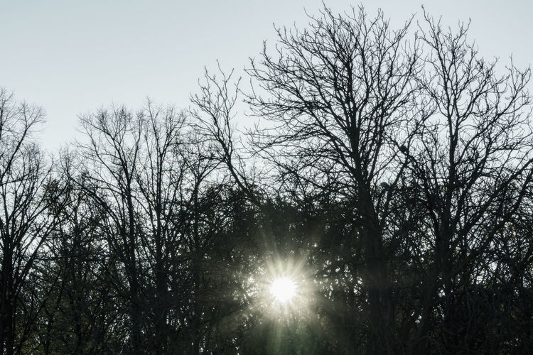 Low Sun Behind Bare Trees Berlin Germany 🇩🇪 Deutschland Horizontal Outdoors Color Image No People Tree Sky Plant Bare Tree Nature Tranquility Branch Low Angle View Sunlight Forest Day Beauty In Nature Sun Silhouette Growth Scenics - Nature Brightly Lit Lens Flare Tranquil Scene