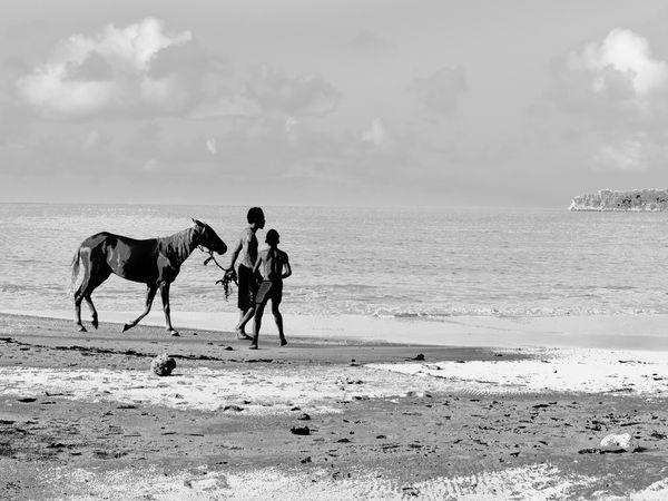 Walking the pony Beach Beach Photography Beachphotography Caribbean Caribbean Life Caribbean Sea Hot Summer Black And White Photography Black & White Man And Horse Horseback Riding Riding Stable Horse Pony Mane