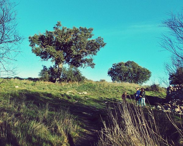 Kids playing BIG Tree Traveling Game Beautiful Nature Blue Sky Green Nature Hello World Right Moment Photograph Lonely Tree Open Edit Writing With Light