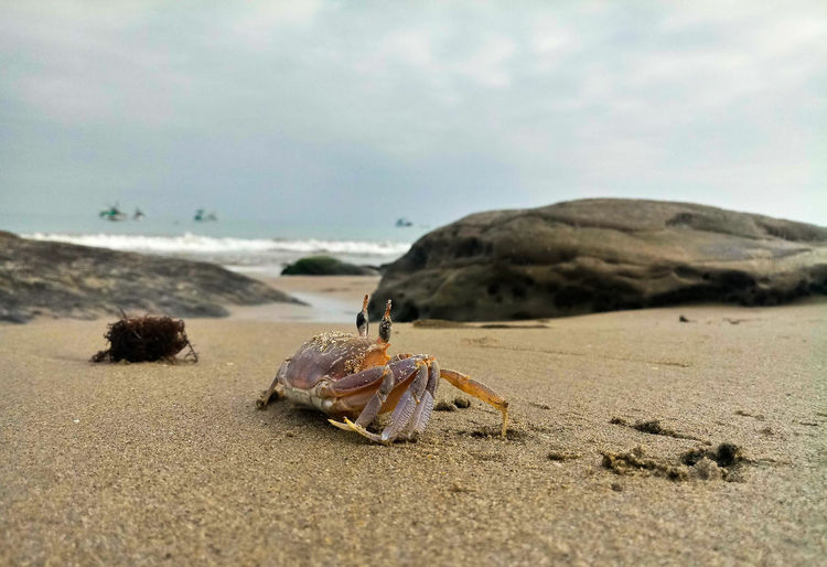 Cangrejo Cangrejo Playa Beach Nature Beach Sea Sand Dune Sea Life Sand Sky Animal Themes Crustacean Crab Invertebrate Hermit Crab Arthropod Crab - Seafood Animal Shell Tranquil Scene