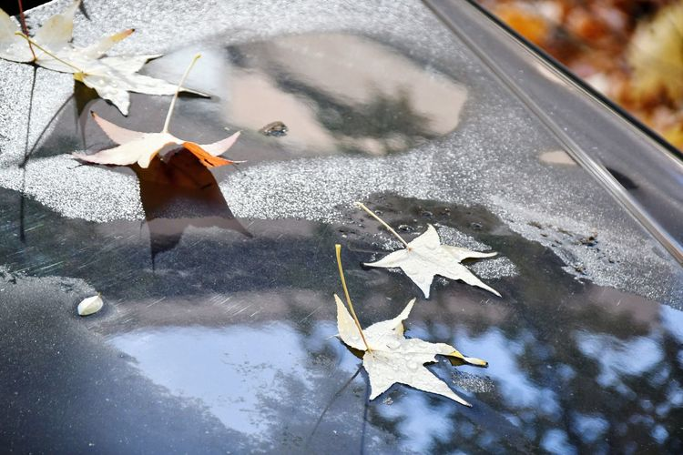 High angle view of maple leaves on wet road