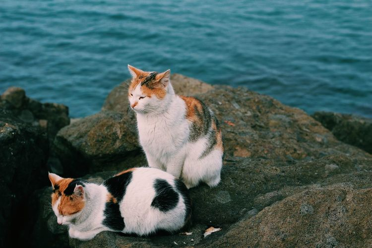 Cat lying on rock by sea