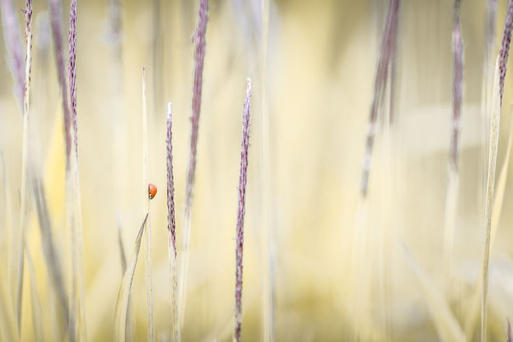 lady bug Growth