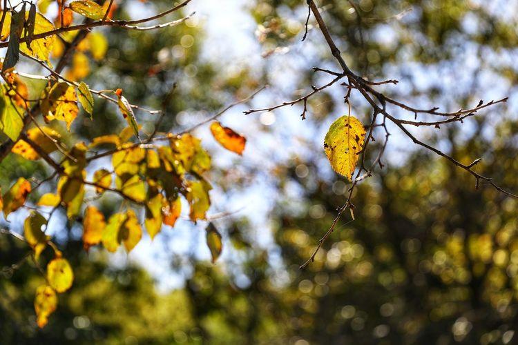 시나브로 가을이 와 있구나 . . #하루한컷 #가을 #단풍 #5DMARK4 #신계륵 #EF2470F28LIIUSM Tree Branch Hanging Autumn Multi Colored Close-up Sky