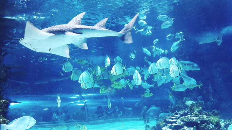 Tropicarium Water World  Tropicarium Tropicariumbudapest Underwater World UnderSea Aquarium Underwater Blue Sea Life Fish Fish Tank Fishes Shark Floating In Water Tropical Fish Swimming