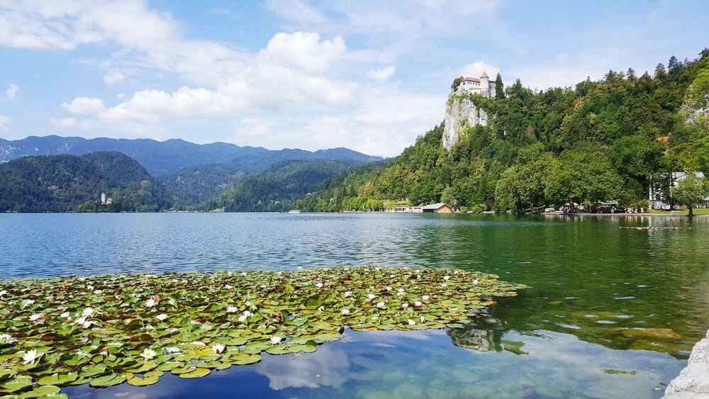 Reflection Lake Tree Water Outdoors Nature Sky Landscape Reflection Lake Mountain No People Day Castle Sun Sunny Day Landscape_Collection Lake View Bled, Slovenia Bled Castle Village