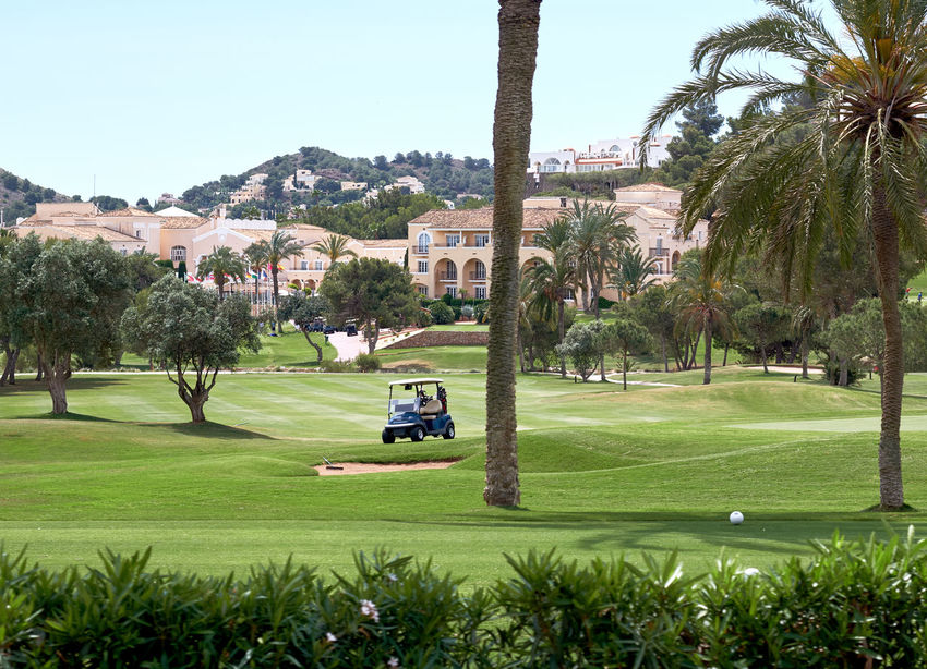 Golf field in Spain Field Golf Golf Course Palm Tree Summertime Day Golf Car Golf Club Golfcourse Grass Green Color Green Lawn Lawn Meadow Nature No People Nobody Outdoors Palm Tree Plant Sky Sport Summer Tree Tropical Climate