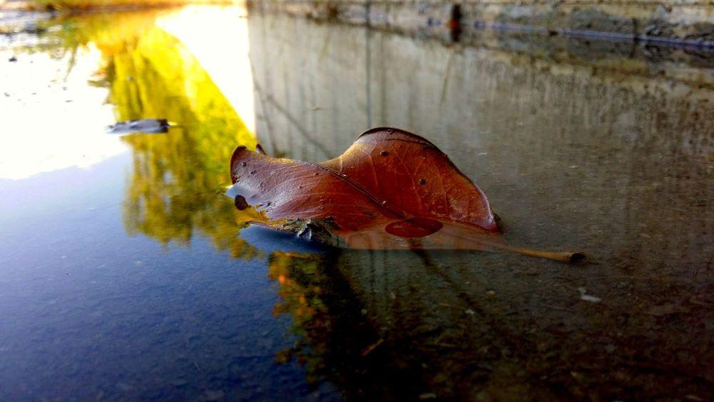 Nature H2o Goccie D'acqua Stagno Foglia