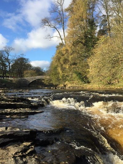 River Ribble at Stainforth Falls, Stainforth, North Yorkshire. Tree Nature River Beauty In Nature Sky No People Tranquil Scene Day Tranquility Water Outdoors Scenics Landscape Cloud - Sky Forest Travel Destinations Growth Branch Bare Tree Waterfall Autumn Stainforth Falls North Yorkshire