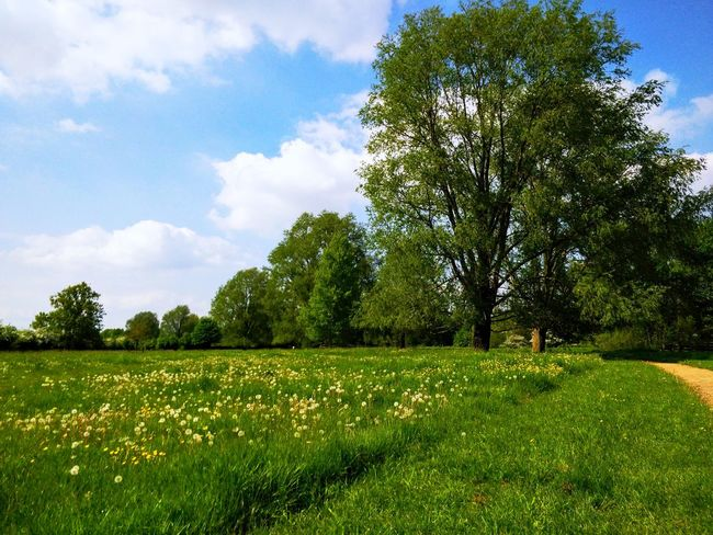Beauty In Nature Cloud - Sky Day Environment Field Grass Green Color Growth Land Landscape Nature No People Non-urban Scene Outdoors Plant Scenics - Nature Sky Tranquil Scene Tranquility Tree