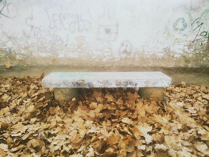 Fall Lastdaysofsummer2015 Leaves Orange October Vscocam Bench Grafitti