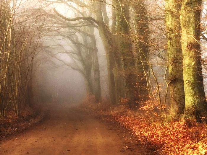 Tree Forest Tree Trunk Autumn Landscape Fog Foggy Mist Outdoors No People Bare Tree Nature Cold Temperature Wilderness Spooky