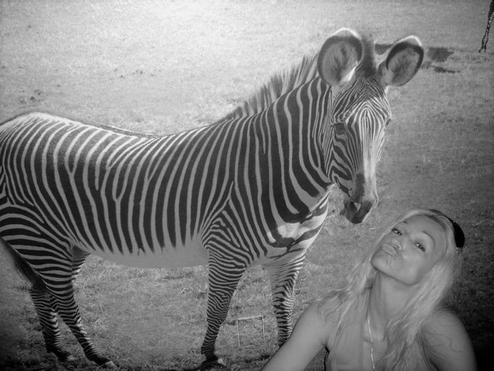 Animal Print L<3VE Animal Themes Animals In The Wild Bacinibacetti💋💋 It's A Wild Kinda Love Striped Wildlife Zebra Thats Me