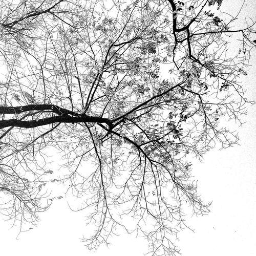 BLCK&WHT Trees