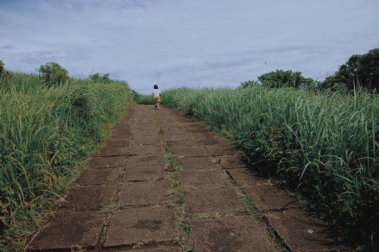 Rear view of girl walking in farm against sky