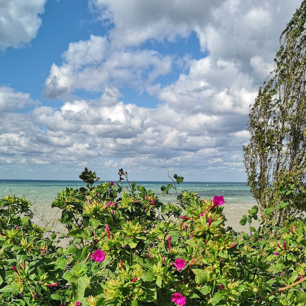 plant, sky, flowering plant, beauty in nature, flower, cloud - sky, growth, water, sea, nature, freshness, scenics - nature, vulnerability, day, tranquility, tranquil scene, fragility, horizon over water, horizon, no people, outdoors, flower head