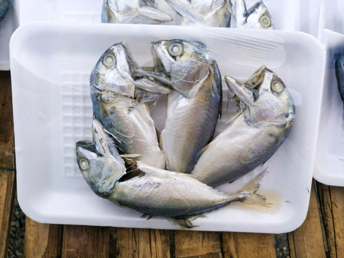 Mackerel Food