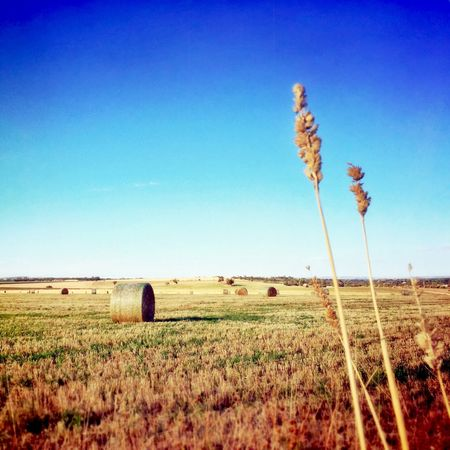 Project 365 Hay Bales Fields Clear Blue Sky IPhoneography Camera+ IPad Edit Snapseed