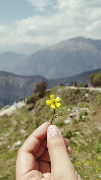 Pretty Little Things Uttrakhand Tourism Trekking Nature Lover Scenery Naturelovers Nature Photography Meadows And Fields Meadow Tourism Backpacking Himalayas, India Uttrakhand Uttrakhanddairies Chopta Valley Flower Mountain Wildflower Blooming First Eyeem Photo The Great Outdoors - 2018 EyeEm Awards The Traveler - 2018 EyeEm Awards Flowering Plant