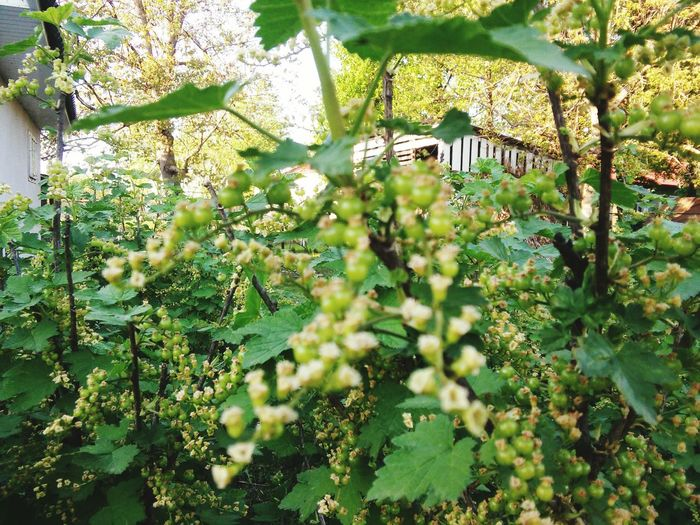 Village Life Village View Currants Beauty First Eyeem Photo