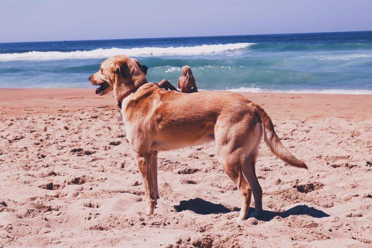 Beach Pet Portraits