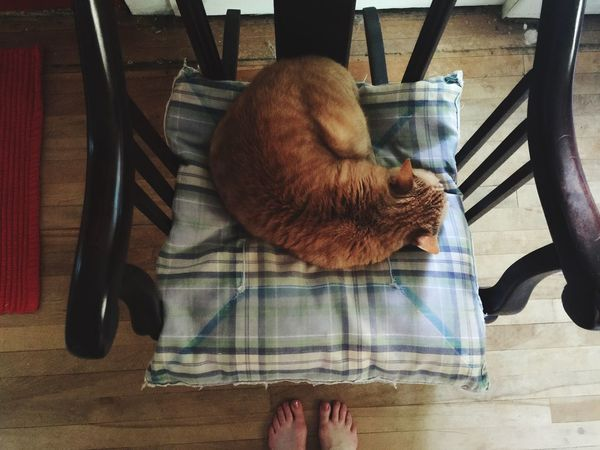 Cat Cats Cat♡ Catsofinstagram Catsagram Cat Lovers Catoftheday My Cat Caturday Pets Corner