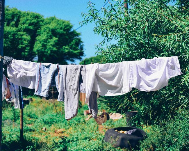 Clothes drying on grassy field