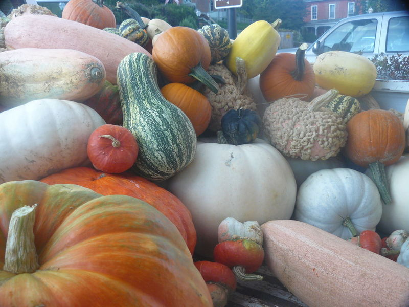 Choice Close-up Day Food Food And Drink Freshness Gourd Healthy Eating No People Pumpkin Squash - Vegetable Variation Vegetable