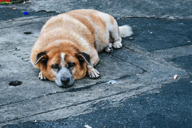 High angle view of dog sleeping on street