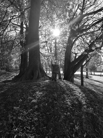 Winter time at birkenhead park. No People Tree Tree Trunk Nature Sunlight Growth Day Outdoors Beauty In Nature First Eyeem Photo