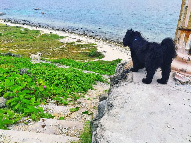Meetup Dog Pets Animal Themes Sea Side Beach View Travel Friends No People Outdoors Nature Water Beach Dogs Blackandwhite BlackDog Black Whitedog Shihtzu Pet Portraits Pet Shih Tzu Love Shihtzulovers Doglover Shih Tzu Connected By Travel
