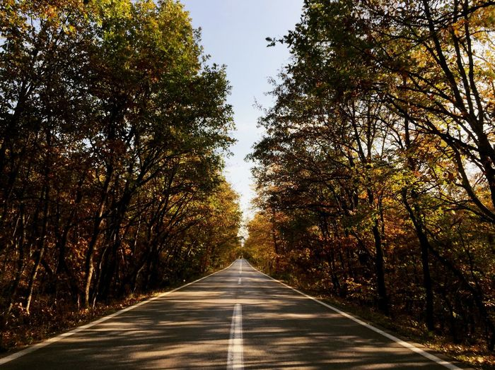 Empty Road Amidst Trees In Forest During Autumn