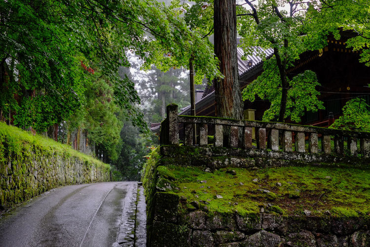Nikko, Tochigi, Japan. Japan Nikko Rainy Days World Heritage Beauty In Nature Day Fujifilm Fujifilm_xseries Green Color Growth Nature No People Outdoors Road Scenics The Way Forward Tree