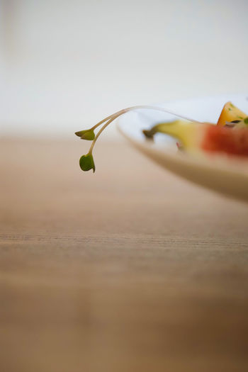 Close-up of plant on table