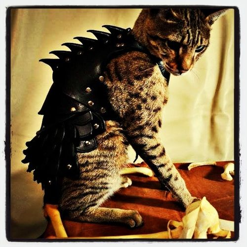 I want this for my cat :3
