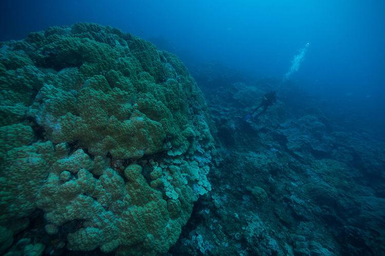 High angle view of scuba diver swimming in blue sea
