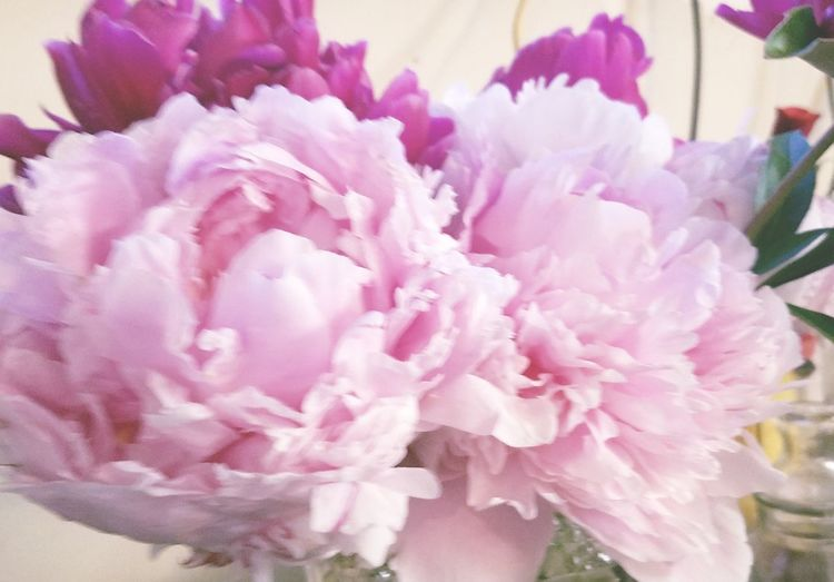 Peonies fresh from the garden! Beauty In Nature Flowers Nature Soothing To The Soul Flower Head Flower Peony  Pink Color Petal Close-up In Bloom Plant Life Blooming Bouquet