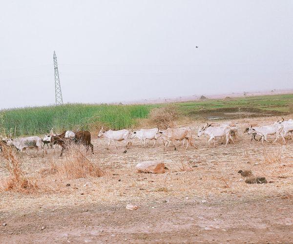 Close-up of wet grass in rainy season