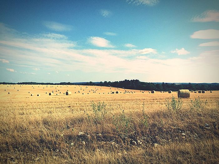 Summer Views Fields Field Landscape Summer