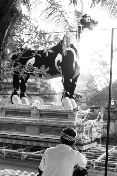 a black ox sarcophagus or lembu is readied for a prominent ngaben (Balinese Hindu cremation ceremony) in Ubud, Bali March 2018. Bali Balinese Life Event INDONESIA Black And White Black Ox Cremation Ceremony Culture Day Lembu Lifestyles Monochrome Ngaben Occupation One Man Only Outdoors Real People Rear View Sarcophagus Street Photography Ubud