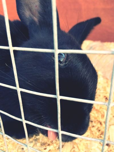 ???????????? Rabbit Photography First Eyeem Photo