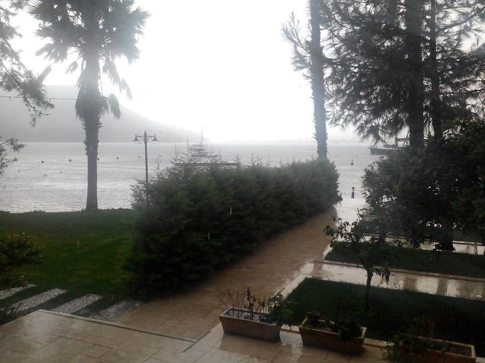 The raining