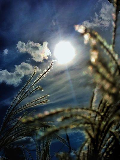 Sunbeam Nature