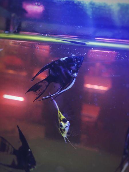 Fish Animal Themes