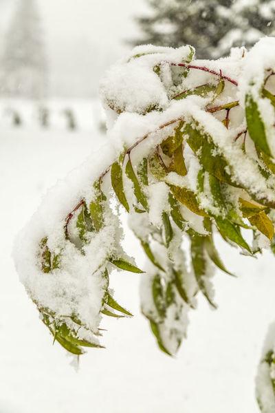 Erster Schnee Nature Pflanzen Plants Schnee Snow Snowfall Winter Wintereinbruch
